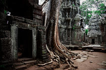 Ta Prohm Temple II by David Pinzer