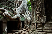 Ta Prohm Temple by David Pinzer