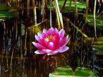 Lotus Flower by Mirela Oprea