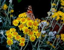 Butterfly by Mirela Oprea