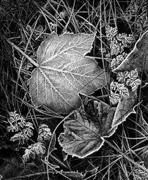Frozen Leaves by Amos Edana