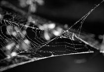 Webs-3-sharpen