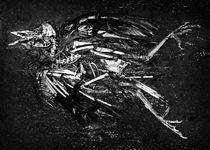 Birdskeleton