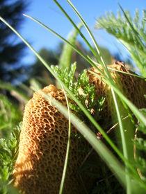 Hidden Mushroom by Charlotte Gorzelak