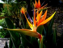 Exotic Flower by Mirela Oprea