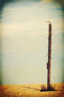 Beach-iii-lookout-c-sybillesterk
