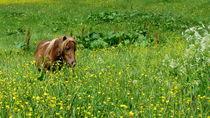 Pony by Mirela Oprea