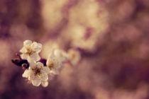 Melange-de-couleurs-by-csaby1-d2muh69