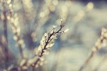 a winter pastel  by Csaba Kiss