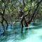 Os-sun-in-the-mangroves-moreton-bay
