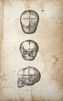 Baby Skulls by Mark Strozier