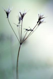 Blütenposter von Jens Berger