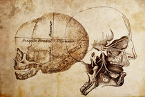 Antique Skull Illustrations by Mark Strozier