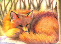 The fox by Francesca Zambon