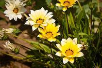 Horticulture#8 von Joseph Amaral