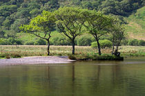 Trees on the Lake Shore in England's Lake District by Louise Heusinkveld