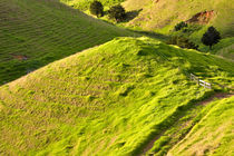 Rolling Hills of the New Zealand Landscape von Louise Heusinkveld
