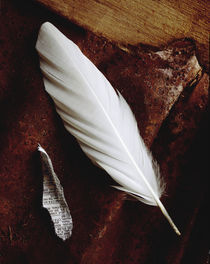 White Feather by Greg Wright