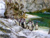 Penguins,Schönbrunn Zoo by Mirela Oprea