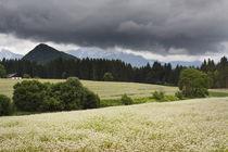 Sommerfelder von Bryan Bennett
