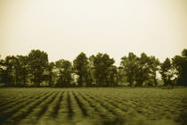 Farmland von Greg Wright