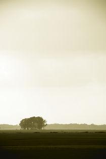 Summer Field von Greg Wright