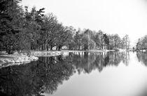 mirror forest by Maciej Juszczak