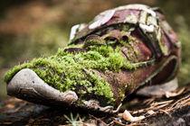predatory moss by Maciej Juszczak