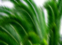 Palmen von Jens Berger