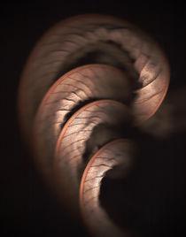 Leaf by Brian Haslam