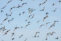 Birds attack von Martin Kubes