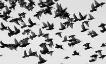 Birds von Martin Kubes