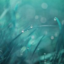 'morning droplets' by Priska  Wettstein