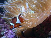 Nemo by Kathrin Löbl