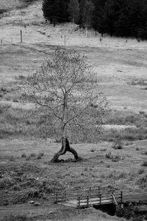 Walking tree by Martin Kubes