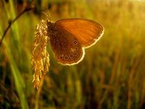 Golden by Mona Botoiu