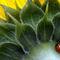 7-spot-ladybird-300