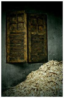 sugar cane by Andreia Costa