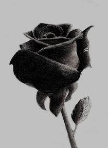 Rose von Jolanta  Bialecka