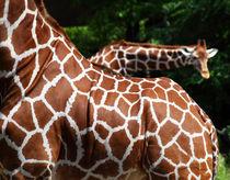 Giraffen by buellom