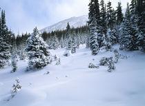 Colorado Winter by Colorado Images