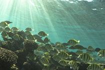 Underwater-westaustralia-img-6621