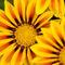 0859-yellows-sq-b-nologo
