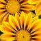 0857-yellows-b