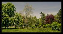 Tabacarie park by Alexandru Busuioc