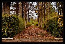 Autumn alley by Alexandru Busuioc