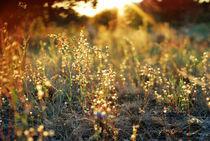 sunset over meadow von infin1ty