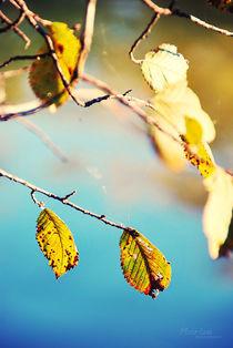 Autumn von Maria Livia Chiorean