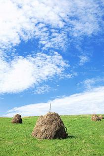 Countryside von Maria Livia Chiorean