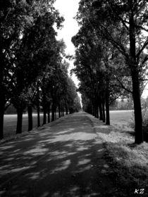 Monza, park street by Katia Zaccaria-Cowan